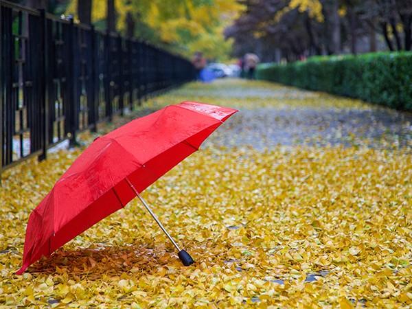 雨伞的保养知识